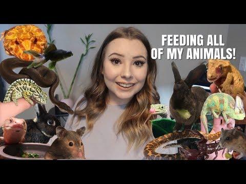 Feeding ALL Of My Pets! 40+ Animals