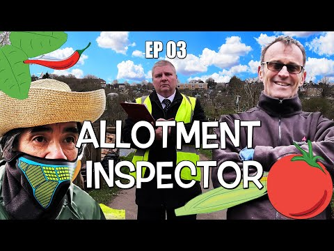 Buckingham Allotments EP 3