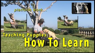 Teaching Puppies to Learn - the puppy platform positions