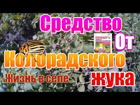 Средство от колорадского жука Командор| Травим колорадского жука | Жизнь в селе