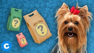 5 Dog Foods for Small Dogs