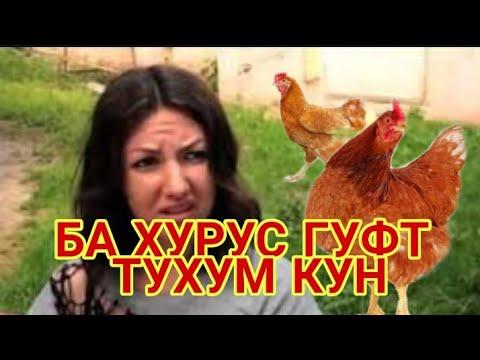 БА ХУРУС ГУФТ ТУХУМ МЕКУНИ 04.04.2019 кадамшо исоев