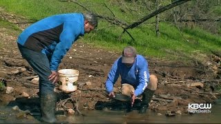 Erosion From Rain Runoff In Sierra Foothills Brings Joy To Gold Panners