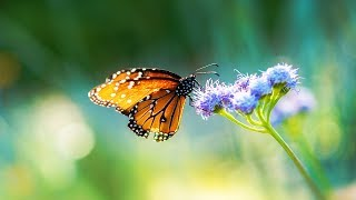 """Peaceful Relaxing Instrumental Music, Meditation Music """"Where Fairies Dance"""" by Tim Janis"""