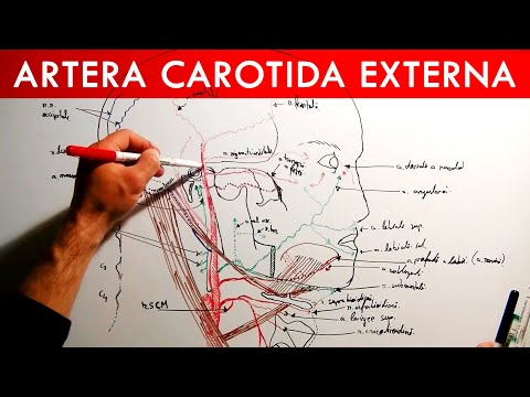 Ser de tratament cu artroză