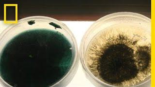 Las bacterias que consumen petróleo podrían ser una solución para la limpieza de derrames