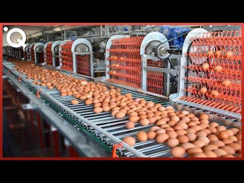 Essas máquinas de processamento de alimentos são incríveis