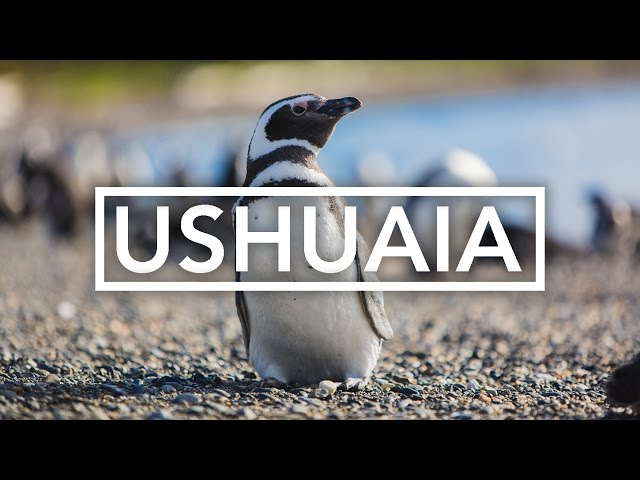 Penguins in Ushuaia with Viventura