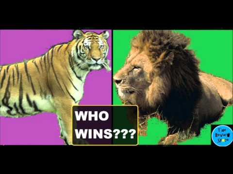 Tiger vs Lion (Realistic Comparison)