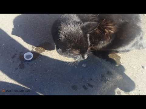Man gives thirsty street cat a drink, has a conversation with it