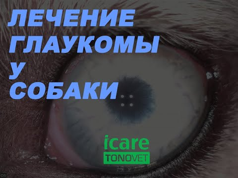 Лечение глаукомы у собаки - Glaucoma treatment in a dog