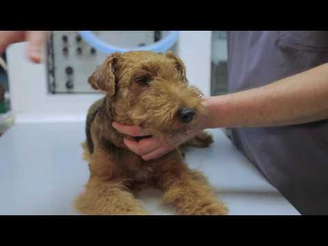 Заболевания глаз у животных – Ветдоктор – ответ 10