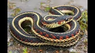 Snake Trap: How to remove small snakes from your yard
