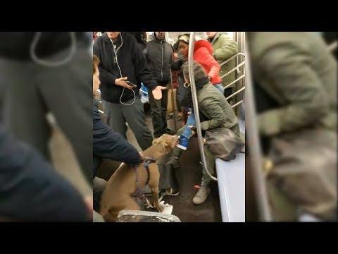 Hundeattacke in der U-Bahn
