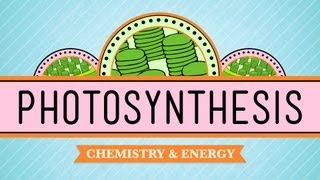 Photosynthesis: Crash Course Biology #8