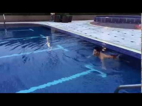 藍sir蝶泳示範