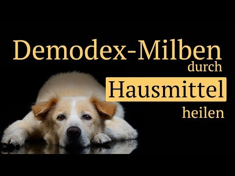 Demodex Milben beim Hund mit Hausmitteln behandeln - ohne Chemie