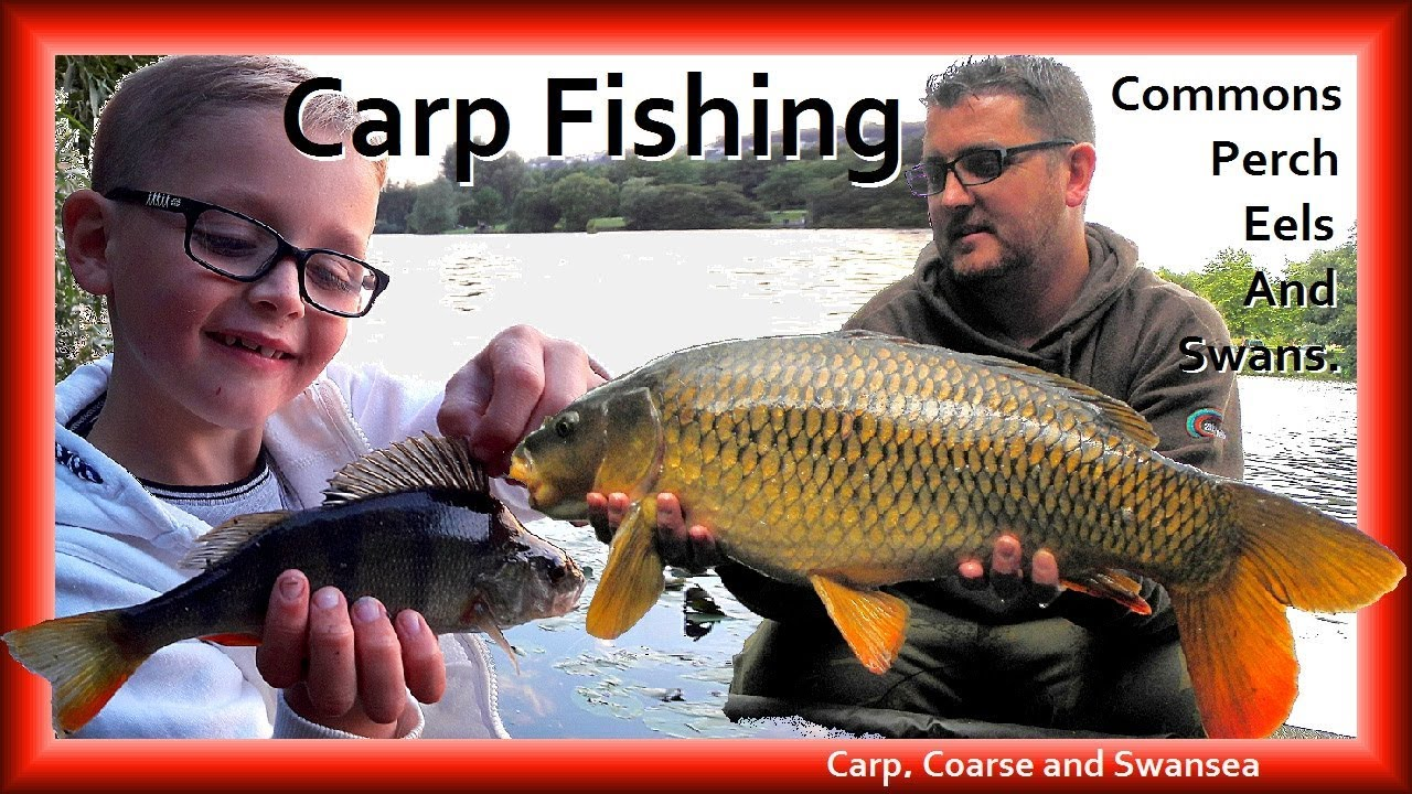Commons, Perch, Eels and Swans. Video 159