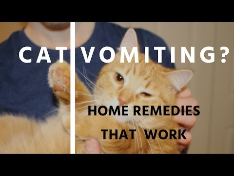 5 Home Remedies For Cat Vomiting