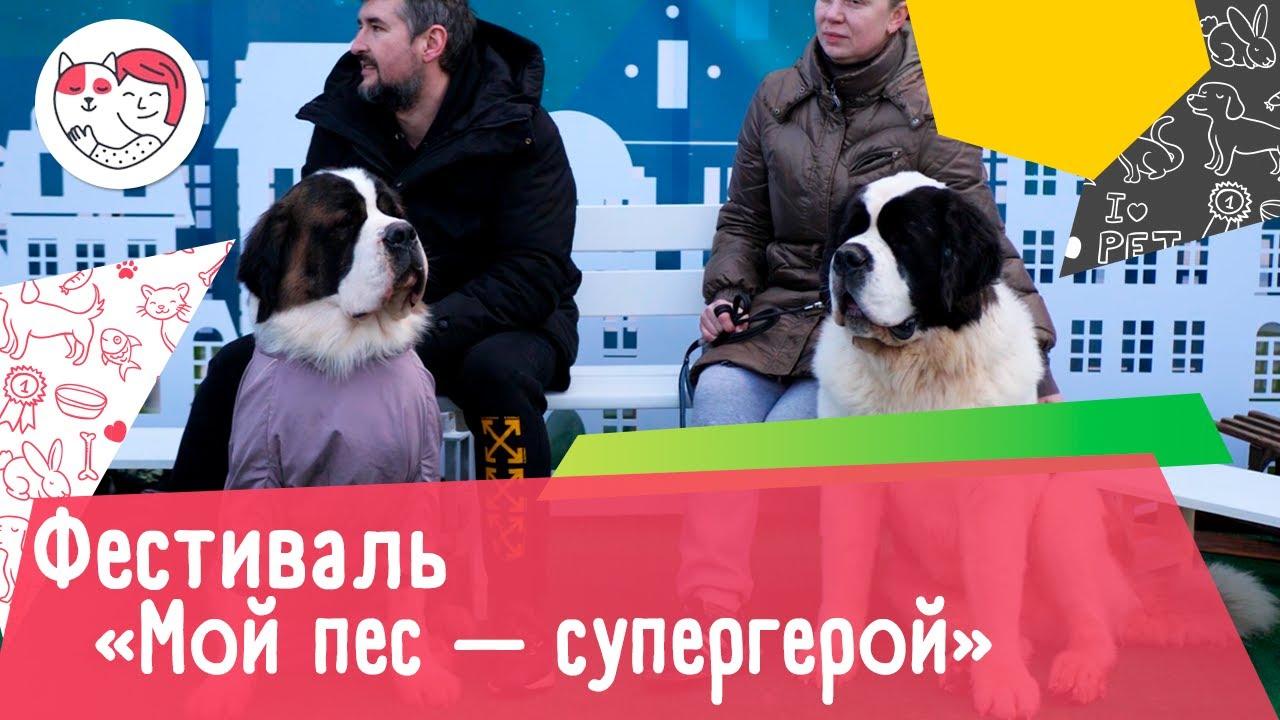 Первый зимний фестиваль «Мой пес — супергерой»