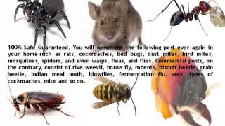 Pest Control Brisbane | 0410 452 014 | Back 2 New Cleaning