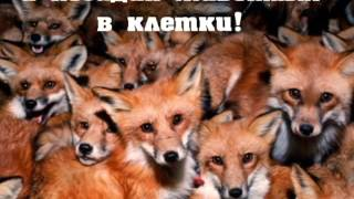 Животные не одежда! Мы за шубы из искусственного меха!!!!  Животные не одежда!