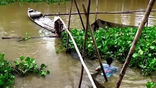 Mùa nước nổi đã qua thì đến mùa dở chà bắt cá, Tri Tôn, An Giang 10/01/2018