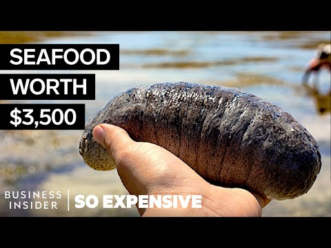 , title : 'Why Sea Cucumbers Are So Expensive | So Expensive
