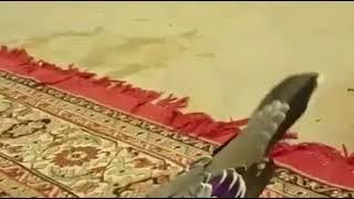 Burung Merbuk Termahal Di Malaysia