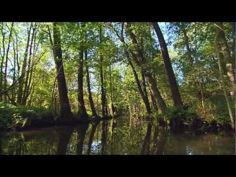 Mit Kanu und Kahn durch den Spreewald