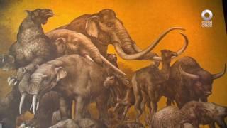 D Todo - Introducción al Museo de Antropología