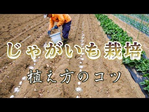 , title : 'ジャガイモの栽培方法【自家農園】いも植え
