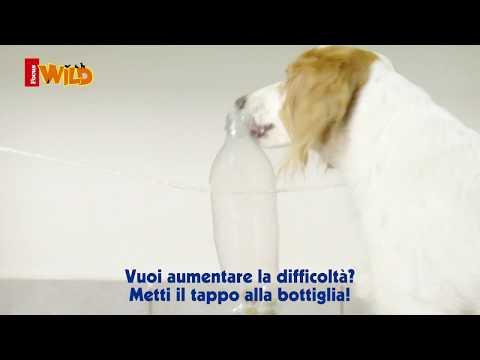 Gioco della bottiglia per cani