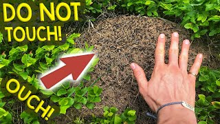 Finding Queen Ants & Colonies   My Trip to the Black Forest, Germany