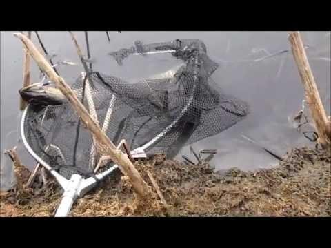 Gyrodactylus paraziták
