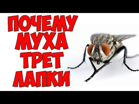 В 4 утра / Почему муха трет лапки?