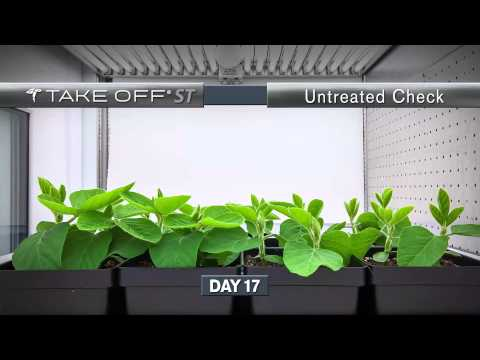 Take Off ST: Seed Treated Soybeans Time-Lapse