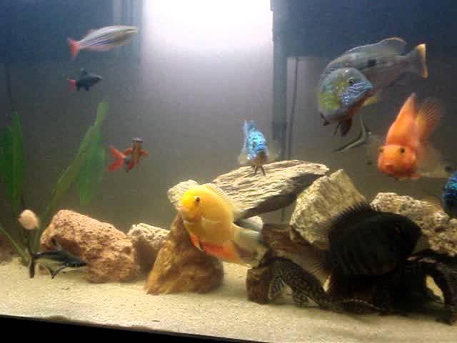 peixes diversos