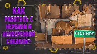 Как работать с нервной и неуверенной собакой (Приют в Ягодном)