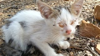 Blind kitten, how he was and how he became