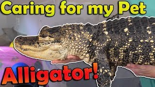 What it's Like to Have a Pet Alligator (2019 Edition)