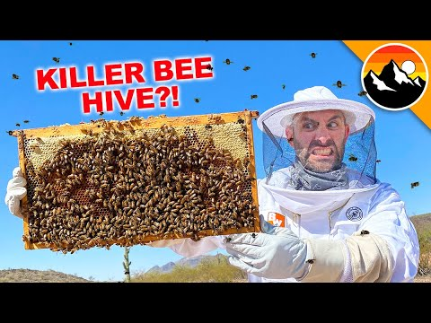 What's Inside a Killer Bee Box?!