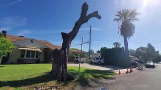 Why Keep That Creepy Dead Tree?