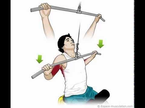 Nous balançons correctement les muscles pectoraux
