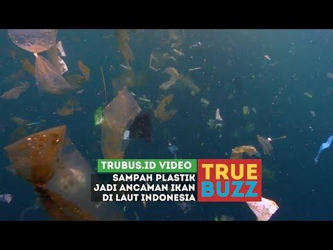Sampah Plastik Jadi Ancaman Ikan di Laut Indonesia