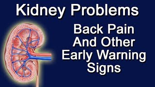 Kidney Problems - Back Pain And Other Early Warning Signs