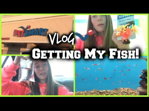PetSmart Vlog! Getting My New Fish!