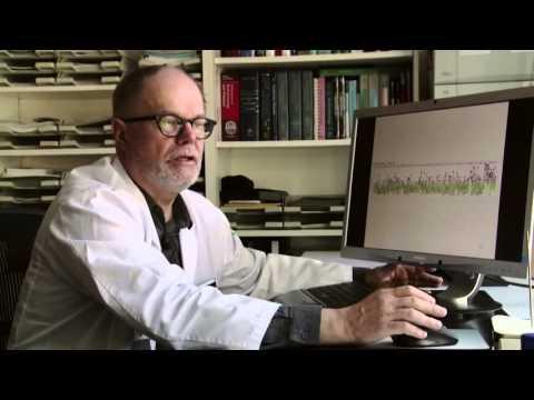 Wie der Bauchspeicheldrüse bei Diabetes