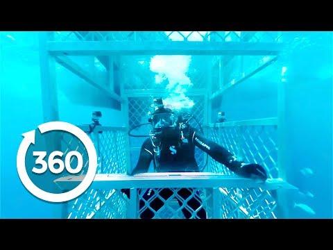 360 Köpek Balığı Adası Ziyareti