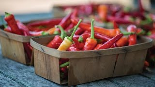 Quick Start Gardening Guide: How to Plant and Grow Peppers